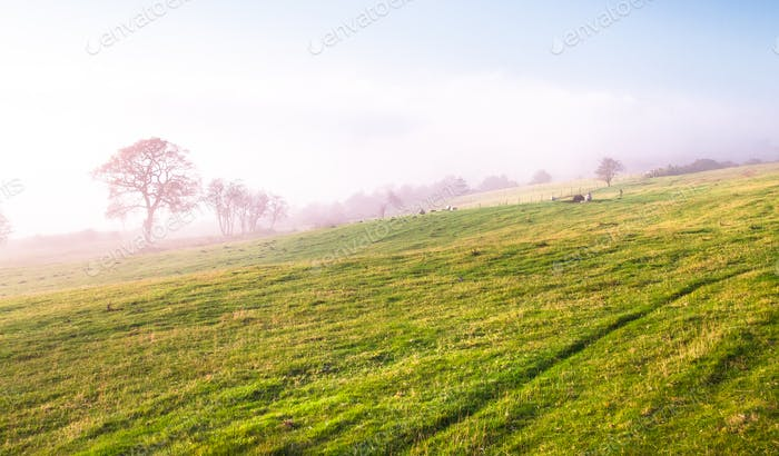 Foggy Grazing Pasture in England