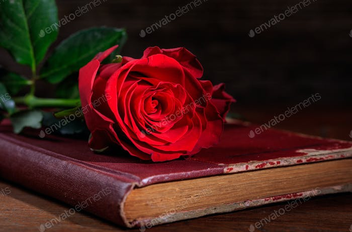 Red rose on a vintage book on dark background