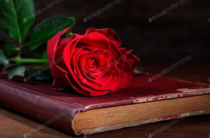 Rote Rose auf einem Vintage-Buch auf dunklem Hintergrund