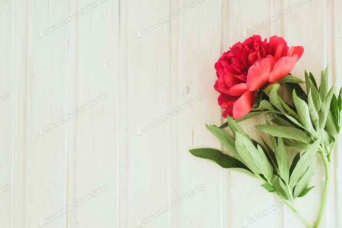 top view red peony on white wooden background with copyspace