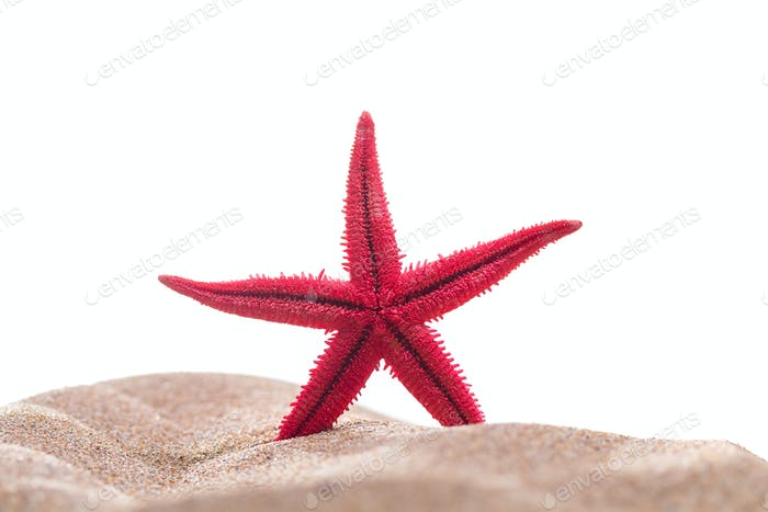Starfish on the sandy beach