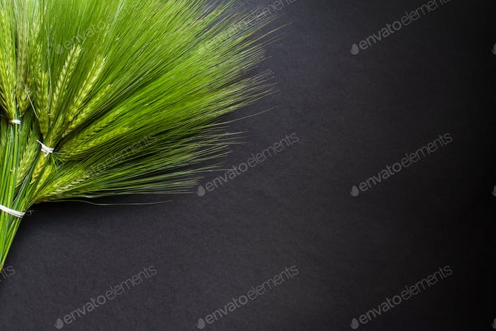 large fresh green wheat bunch