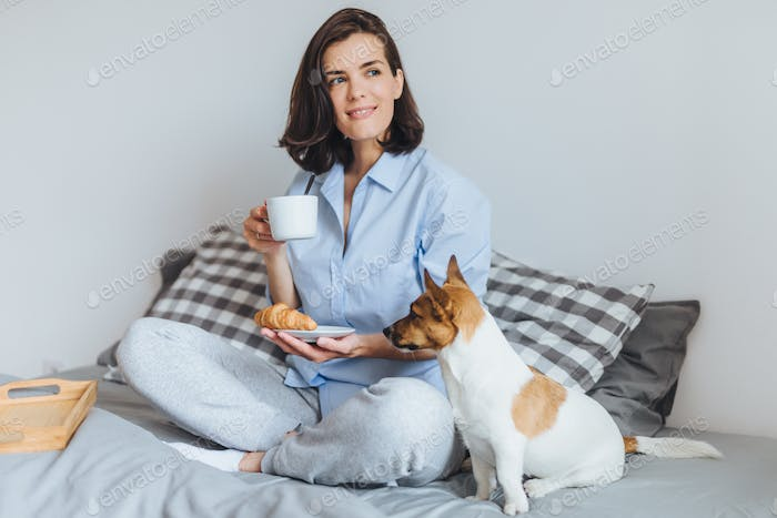 Dreamy female sits on comfortable bed in bedroom, holds cup of coffee and croissant and her dog