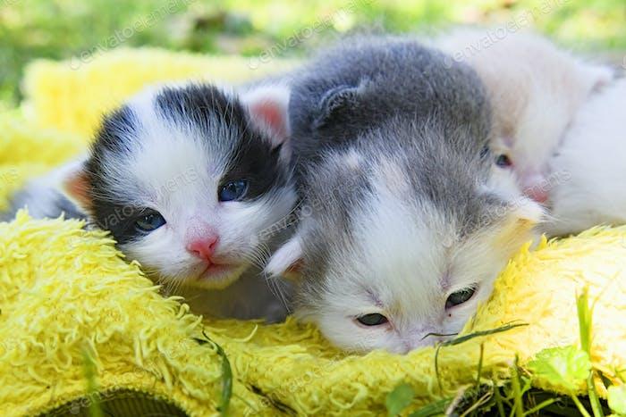 sleeping kittens