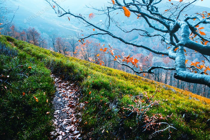 Majestic beech branches with orange leaves at autumn mountains