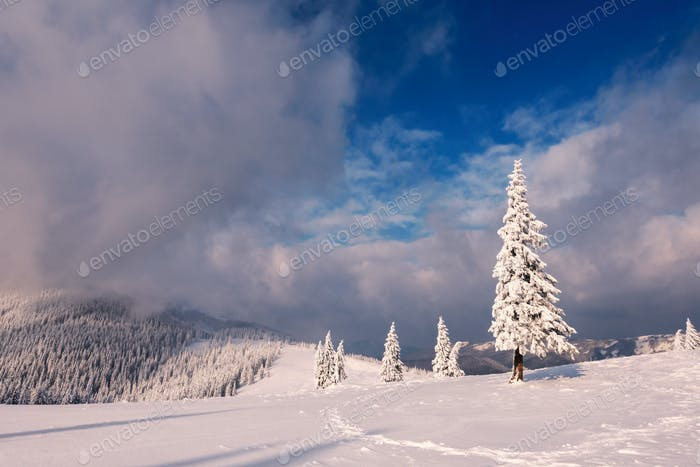Fantastic winter landscape