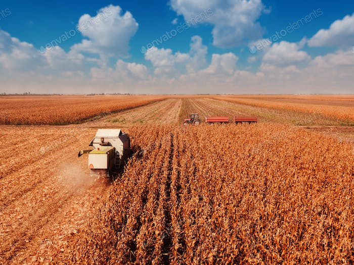 Aerial view of combine harvester in cornfield