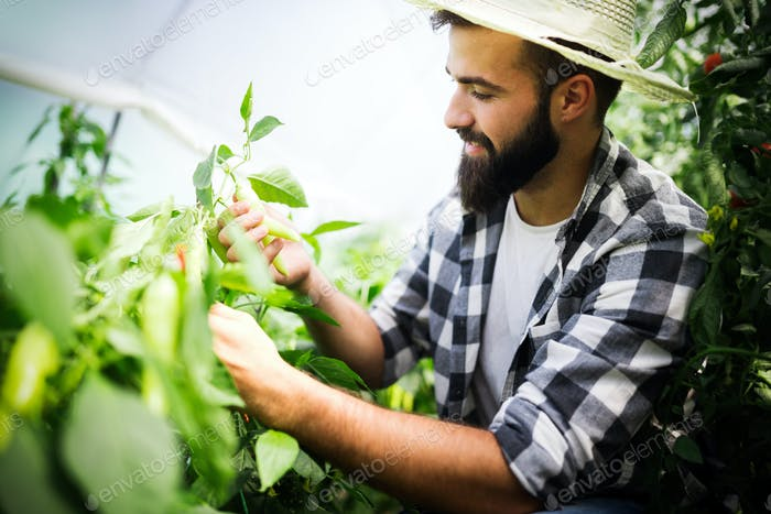 Attractive happy male farmer working in greenhouse