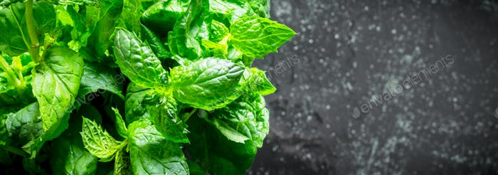 Fresh herbs. Green mint.