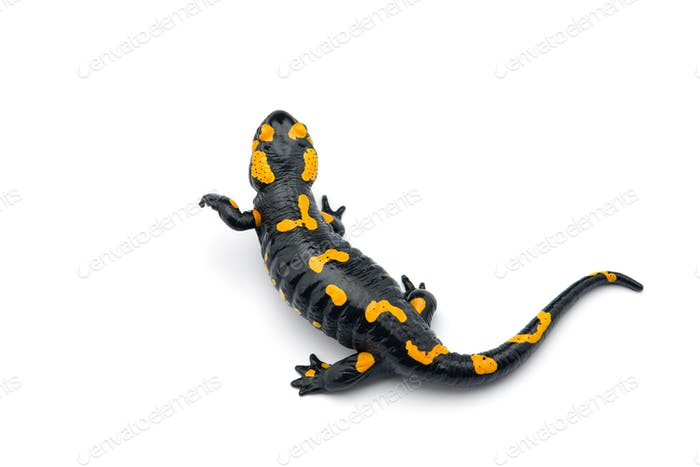 The fire salamander isolated on white background