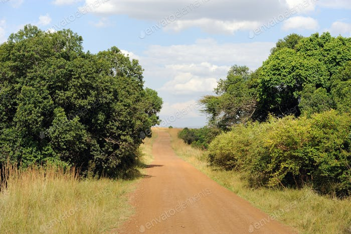 Road in savannah in the National park of Kenya