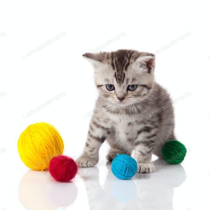 Kätzchen mit Kugeln von Fäden. kleines Kätzchen auf weißem Hintergrund.