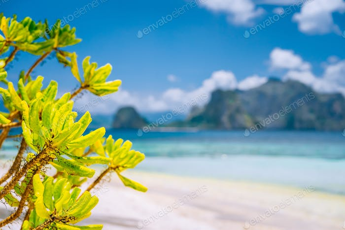 El Nido, Palawan, Philippines. Tropical beach scenery of tropical foliage against blurred ocean and