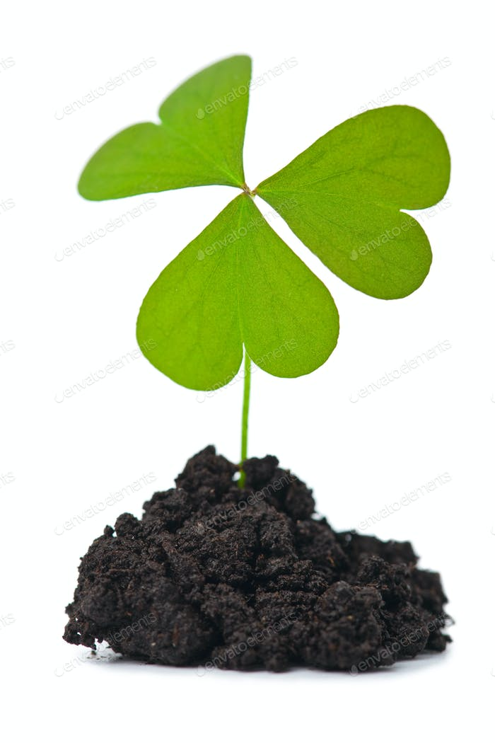 green plant in dark soil isolated