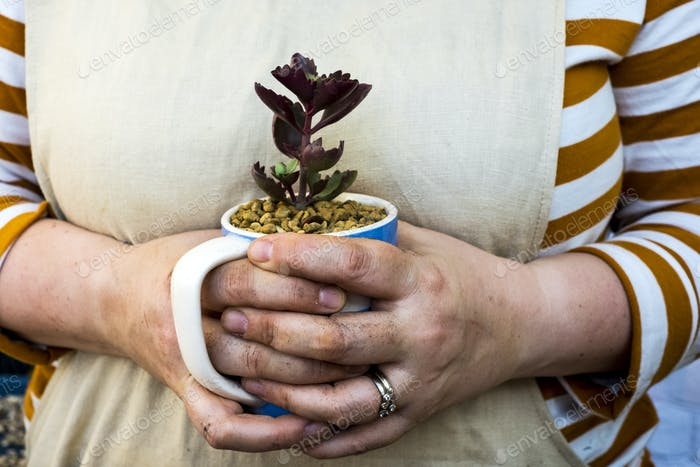 Close up of person holding coffee mug with succulent.