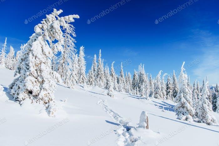 Fantastic winter landscape, steps, the mountains. Carpathian, Ukraine, Europe.