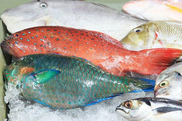Frische tropische Fische im Eis