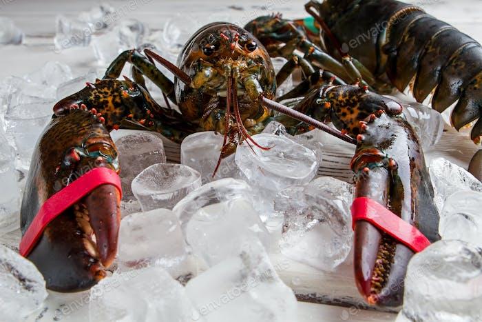 Ice cubes near raw lobster.