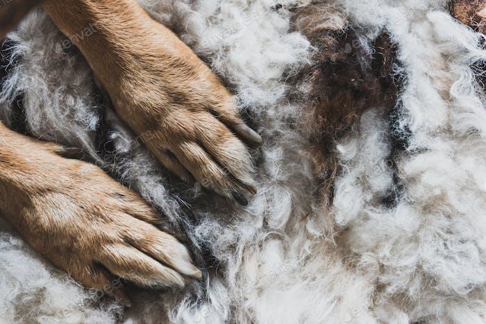 Hundepfoten auf Naturteppich im Innenbereich