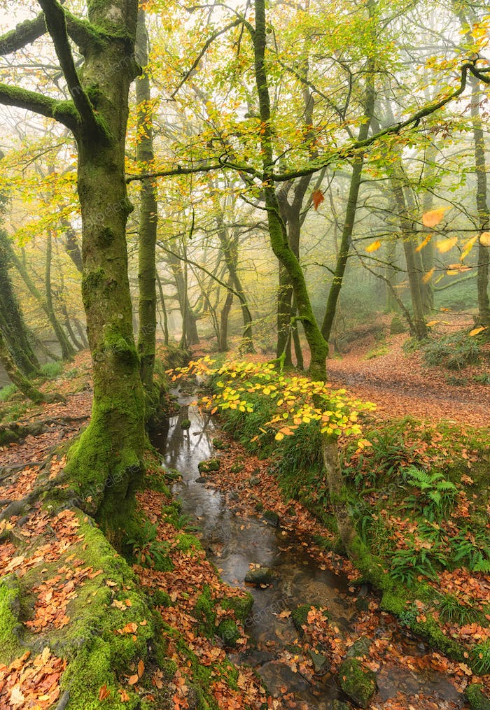 Misty Autumn Woods