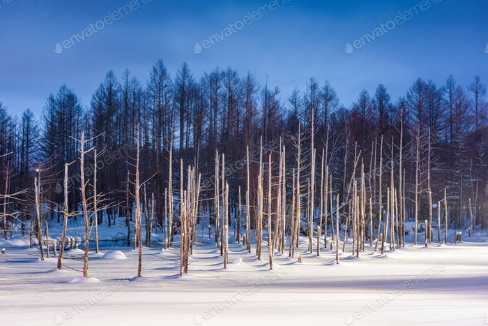 Biei, Japan at Aoike Blue Pond in winter.