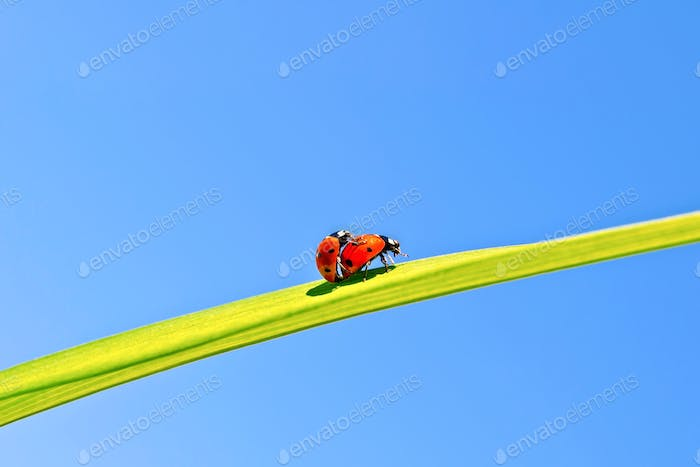 Ladybugs on background of blue sky