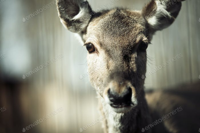 Portrait of deer in wildlife