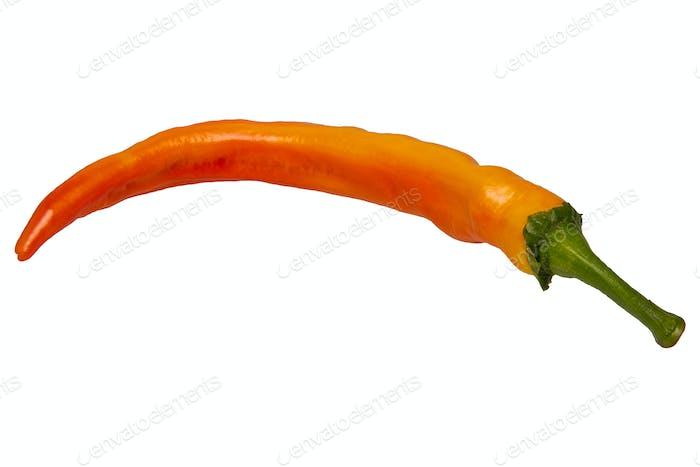 Orange paprika on a white background