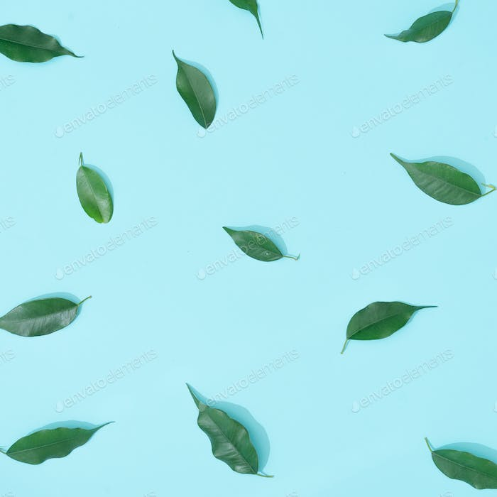 Creative summer background composition with leaves. Minimal top down nature.