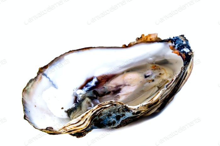 Eine Auster