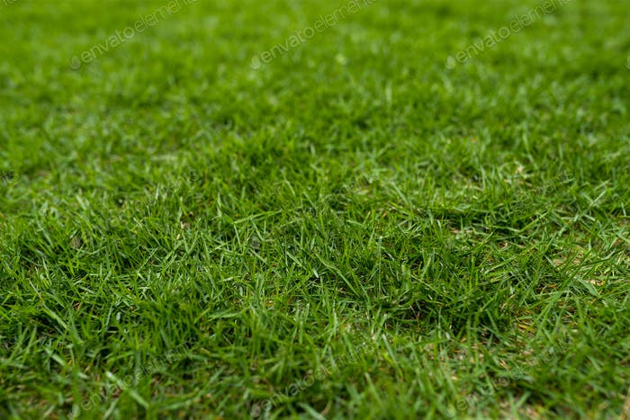 Green lawn on ground