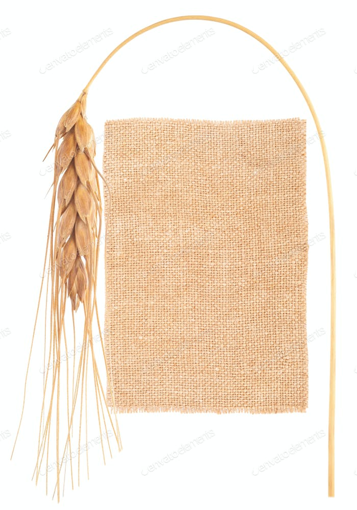 Sackcloth material and ear of wheat