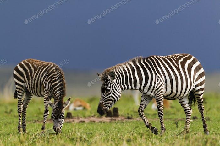 Ngorongoro-175