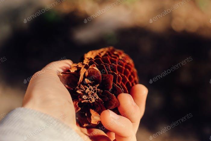 schöne natürliche Tannenzapfen in der Hand auf einem Hintergrund, schützen das Umweltkonzept