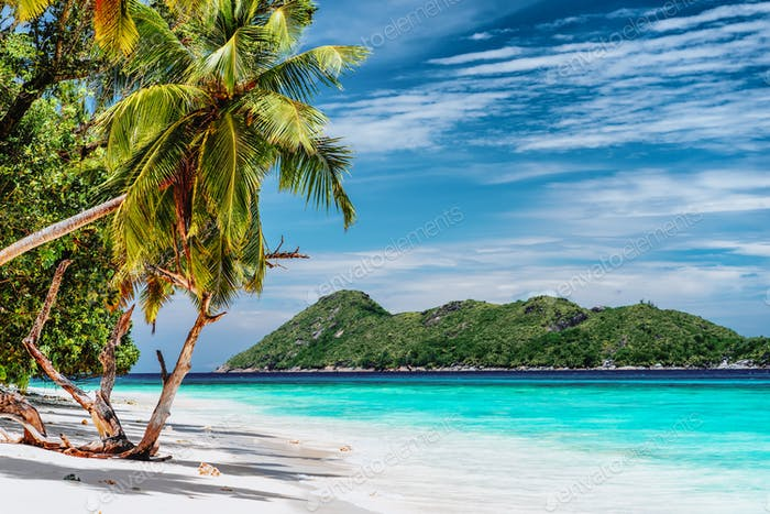 Luxury vacation scene on tropical island. Paradise beach with white sand and palm trees. Long
