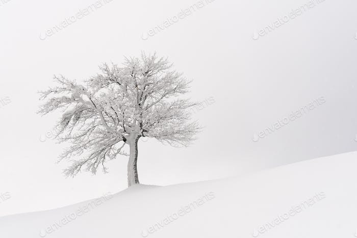 Amazing landscape with a lonely snowy tree