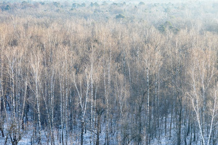 oben Blick auf kahle Bäume im verschneiten Wald