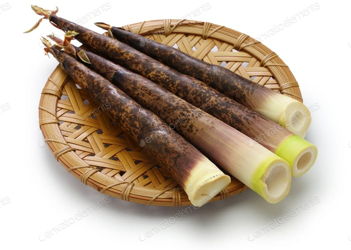 Japanese Madake Bamboo Shoots