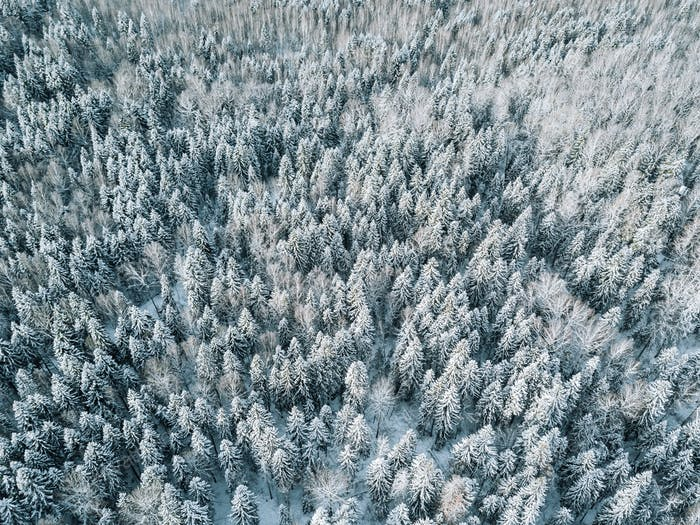 Aerial view of winter forest landscape with snow covered trees in Finland