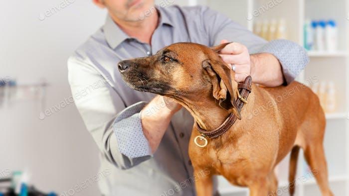 Bavarian Welding Dog Grooming