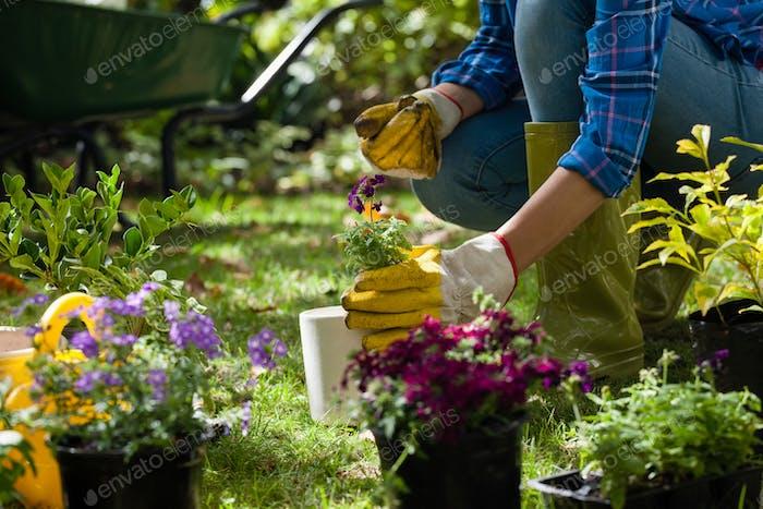 Mittelteil der Frau hält Topfpflanze im Hinterhof