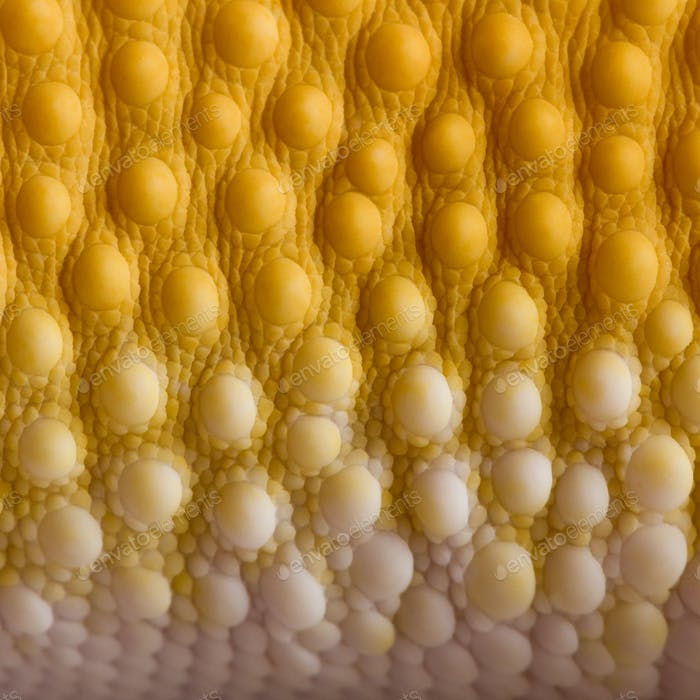 Close-up of Sunglow Leopard gecko scales, Eublepharis macularius