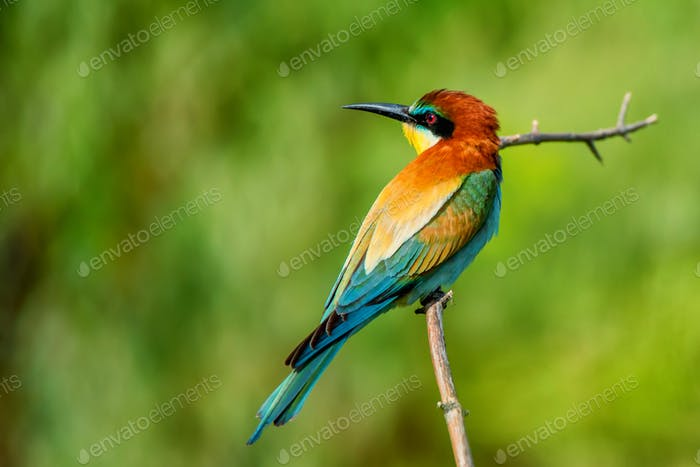 Exotic colorful tropical bird