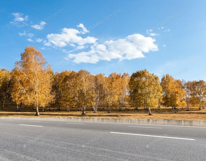 Herbststraße und Birkenwald