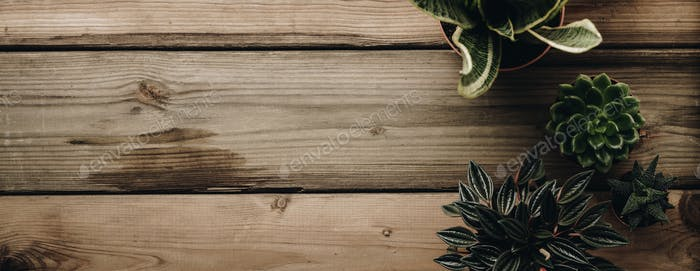 Collection of various cactus and succulent plants on wooden background