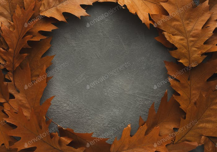 Frame of brown oak leaves on grey background