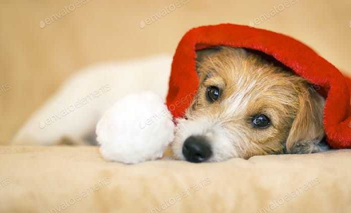 Christmas pet dog with Santa Claus hat