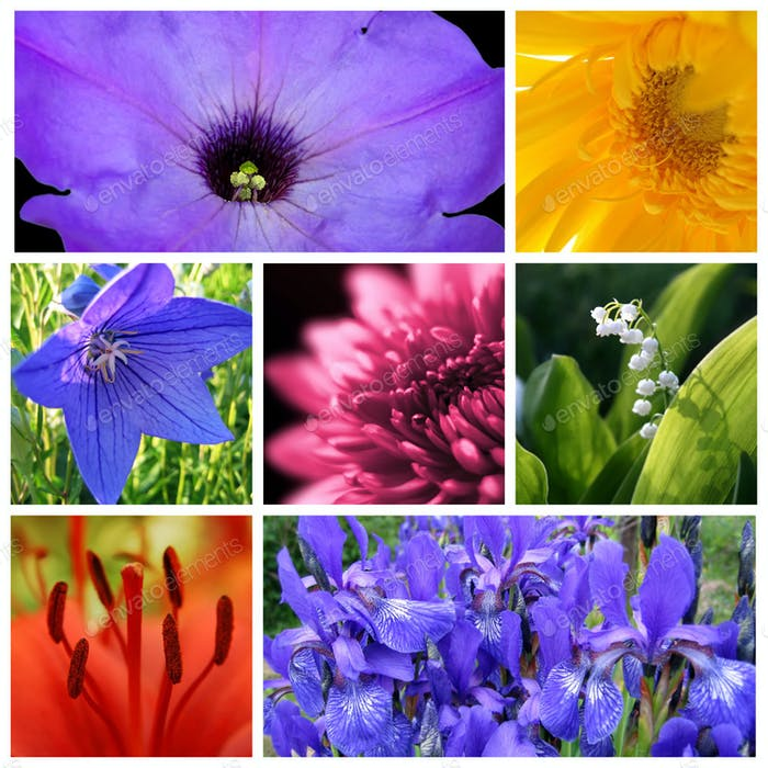 Bright beautiful flowers collage