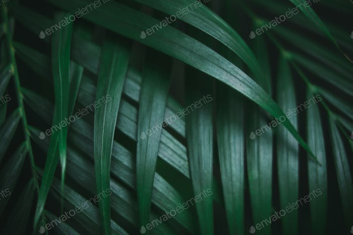 Deep dark green palm leaves pattern