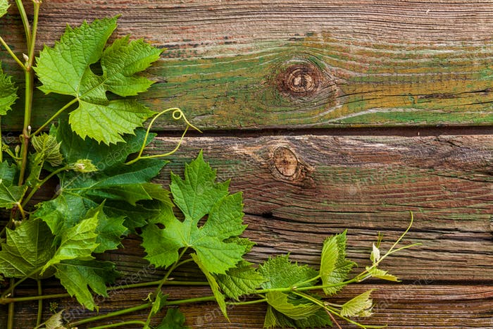 Grape Leaves On A Old Wood Background Photo By Antonpetrus On Envato Elements